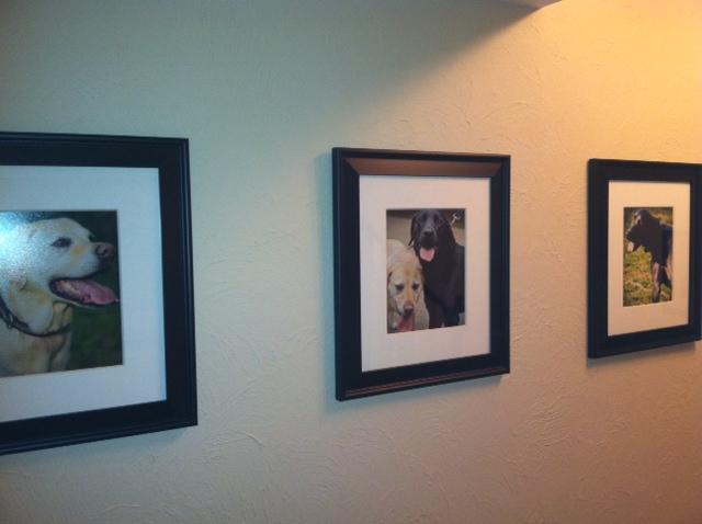 Three framed pet portraits hanging on a client's wall